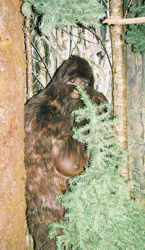Craigslist: Your Bigfoot sighting could be your ticket to